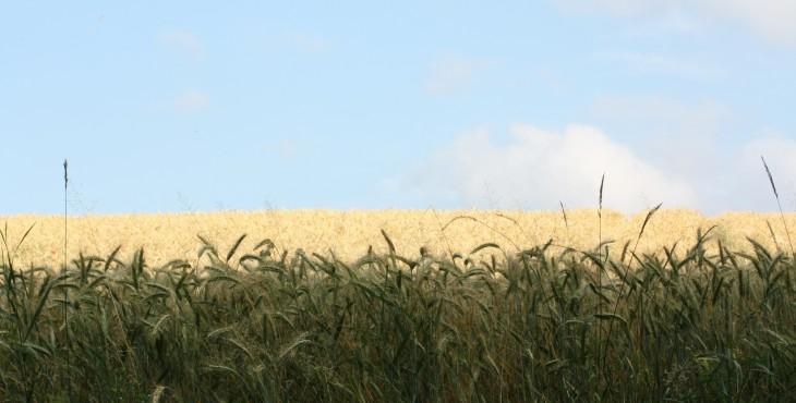 Getreide kein Grundnahrungsmittel