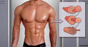 Muskelfasertypen – Was sie für dein Training bedeuten