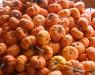 Kürbis – Ein Gemüse der Saison stellt sich vor